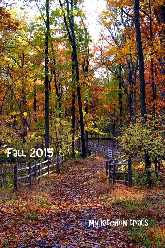 fall1 2015